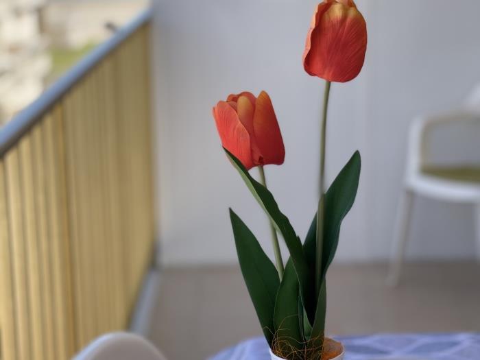 apartbeach adriatico , ideal para sus vacaciones e - la pineda